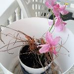 They stuck a fake orchid in a dead plant!