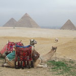 Camels and Pyramids 2