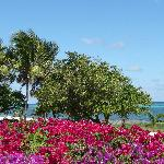 Club St. Croix Flowers