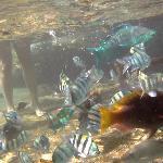fish at base of steps
