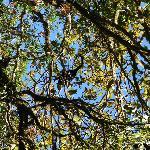 Foto de Sendero Los Quetzales (The Quetzales Trail)