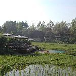 Adult pool set among rice patties.