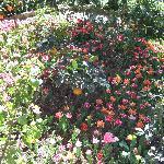 Heller Garden Foto