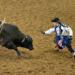 rodeo bull and clown