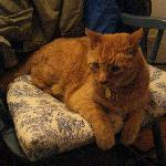 Puddy - the Seven Sea Street cat