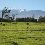 Snow on Mauna Kea from Parker Ranch