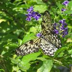 Don't miss the Butterfly Farm 10 minutes away
