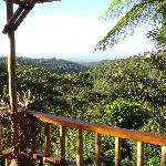 Morning views on the verandah