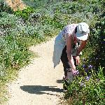 Photo 3: Grey Whale Cove Trail wild flowers