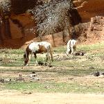 Wild horses in the Canyon
