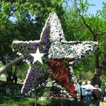 Dallas Blooms - Texas Star