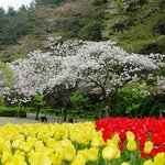 Taman Bunga Hamamatsu