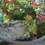 Patio Room Garden