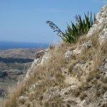 NZ Flax, Te Mata Peak
