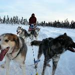 Our happy dog sled team