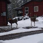 Deer right outside our cabin