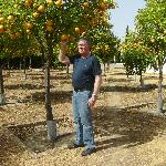 home grown oranges