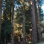 many trees and the side of the house