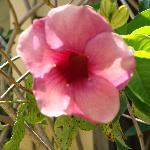 flower's everywhere