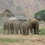 Elephants at the nature park.