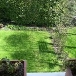yard, from balcony