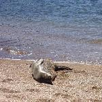 Monk seals are endangered and protected.  Abou 35 live around Kauai and sun on the beaches.