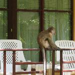 Monkey on the patio