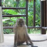 Monkey looking into our bungalow