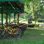 Bicycles to explore the large ground
