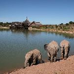 Elephant dip