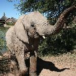 Elephant detour