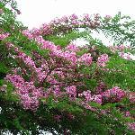 "flower 's name "" chaiyapruk ""@baannamping"