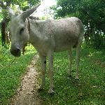 Burro on grounds
