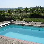 Lap Pool next to the Vineyards...
