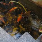 Koi carp in pond in breakfast room