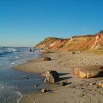 Beach Vineyard