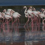 In winter thousands of flamingos and other birds use it as a refuge.