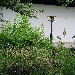 overgrown japanese garden