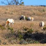 Fossil Rim Wildlife Center