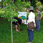 Planting a tree in the garden