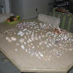 Shells from our week