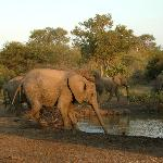 elephants by the watering hole