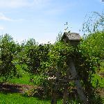 Birdhouse and Gardens
