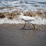 Wild life on the beach