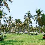 Beautiful lawns and palm trees