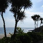 Maritime Vegetation