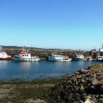 Harbour, Brier Island