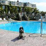 Photo de Livermead House Hotel