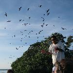 Chico at Bird Key