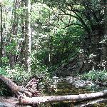 Sturtevant Falls Trail